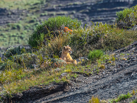 Galería Photographing Patagonia's Wilderness 565x424